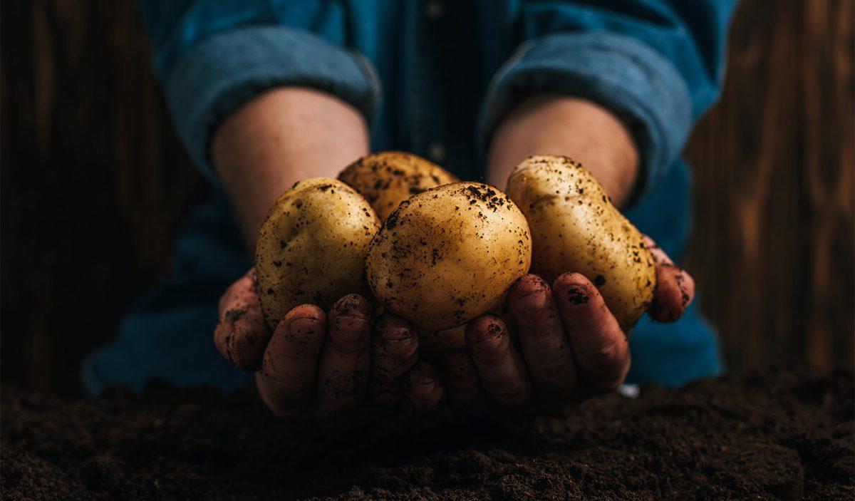 proprietà delle patate